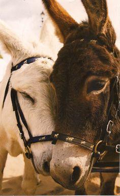 Donkey <3