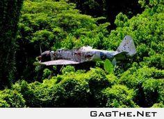 Flugzeug stecken in einem Baum aus dem Zweiten Weltkrieg (Papua-Neuguinea)