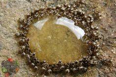 Как избавиться от муравьев на дачном участке – народные способы, приманка, эффективные средства и препараты, почему муравьи боятся соли, манка и пшено для муравьев