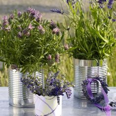 Four reasons to love lavender!   Breathe in the soothing scent. Do you feel relaxed? Lavender is commonly known for its calming capabilities. It's also naturally anti-bacterial and anti-fungal. Having a bouquet of lavender handy can help dispel unwanted pests, purify the air you breathe and keep your laundry fresh. Here are four reasons you should love having lavender in your home.  P.S. Lavender is one of the ONLY things that repels SCORPIONS. I used it on a missions trip, and it worked!