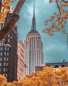 The city is alive with color by @kellyrkopp #nyc #newyork #newyorkcity #manhattan #brooklyn