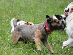 En action avec les promeneurs de chiens de citizen dogs