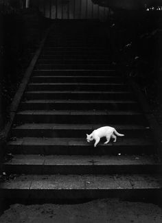 In the Dark Spaces you definitely don't want a white cat to cross your path.