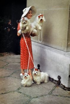 Miss Dahlia's cousin Delphinia and all her Maltese puppies, Trixie, Jinx, Madcap and Moxie......