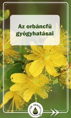 Healthy Drinks, Natural Remedies, Herbalism, Diy And Crafts, Spices, Herbs, Baking, Nature, Natural Home Remedies