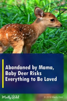 Abandoned by Mama, Baby Deer Risks Everything to Be Loved Cute Funny Animals, Cute Baby Animals, Animal Video Youtube, Little Babies, Cute Babies, Deer Species, Baby Animal Videos, Mama Baby, Kitten Gif