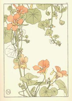 nasturitium - jeannie foord 1901