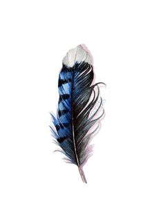 Blue Jay Feather Watercolor  Original Painting by jodyvanB on Etsy, $45.00