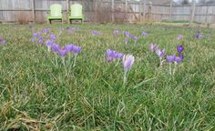 May Dreams Gardens: Plan now for Easter 2014 blooms