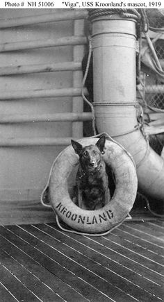 """USS Kroonland (ID # 1541)  """"Viga"""", the ship's Belgian police dog mascot, poses with a life ring, 23 March 1919.  U.S. Naval Historical Center Photograph. Photo #: NH 51006"""