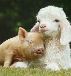 Buenos días , la amistad animal es la más sincera
