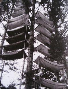 vertical-tree-camping-barres-france-789x1023.jpg (789×1023)