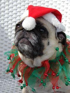 Christmas Pug this ones for you @Tori Sdao O'Connor
