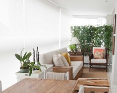 Balkon Sichtschutz  mit Stoffrollos und Spalier mit Kletterpflanzen