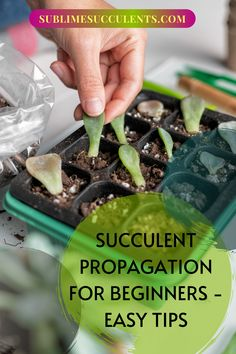 You are new to taking care of your succulents and you find that you are enjoying the results so much that you want more. Sublime Succulents says you can save some money by following our tips to learn how to propagate the succulents that you have now. You will be pleasantly surprised how easy it is to do. If for any reason you find that the propagation process is not working we will help you. Download our guide… #succulentpropagationtips #easysucculentpropagation… Vertical Pallet Garden, Propagating Succulents, Succulent Care, Propagation, House Plants, Projects To Try, Money, Creative, Tips