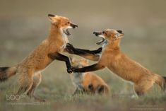 creatures-alive:  Serious Play by Henrik Nilsson