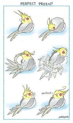 Birds are just smaller cats – Cockatiel Funny Animal Memes, Funny Animal Pictures, Cute Funny Animals, Cute Baby Animals, Animals And Pets, Bird Drawings, Animal Drawings, Cute Drawings, Funny Birds