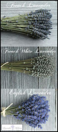 French Dried Lavender by Lavender Melissa - ...Along the Left Bank…Along the Left Bank