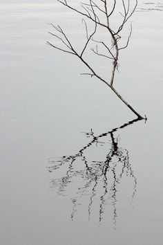 Reflection of branch in still water. Almost a b picture.
