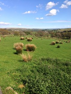 How green is my valley? #northumberland