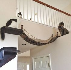 Indiana Jones Bridge That We Created For Our Cat | Bored Panda