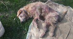 Bologna: cane padronale ridotto così. Parte la denuncia dell'OIPA