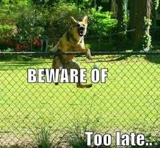 Cheezburger is THE location to find your funny pictures and memes of online cats and animals - oh, and gifs too Humor Animal, Funny Animal Quotes, Dog Quotes, Funny Animal Pictures, Dog Pictures, Funny Animals, Cute Animals, Funny Sayings, I Love Dogs