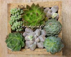 #Plantas Suculentas    Andaluflor