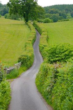 Country road (Kent, England) [unable to determine photographer]