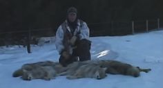 This lucky hunter is out on a predator hunt when his game of choice starts coming from everywhere. Watch the video to see what happens next. Predator Hunting, Coyote Hunting, Fishing Videos, Coyotes, Projects, Animals, Ideas, Log Projects, Blue Prints