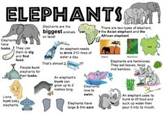 I used this elephant information placemat to support my lower readers when sourcing information for a report on elephants. It's really handy if you can't get your hands on low texts. Elephant Quotes, Elephant Book, Elephant Trunk, Asian Elephant, Baby Elephant, Elephant Facts For Kids, Animal Facts For Kids, Fun Facts About Animals, School