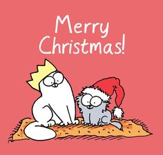 Simon's Cat! So cute :)