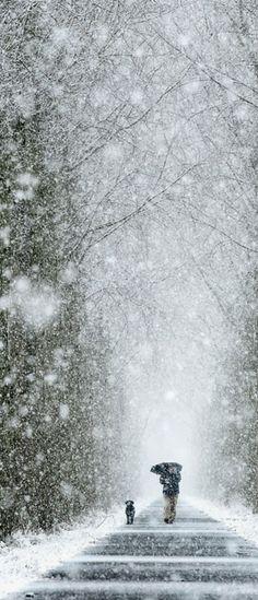 Magical Winter Walk