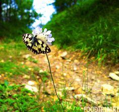 papillon, butterfy, white, black, fleure, violet, vert