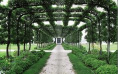 At Oak Spring Farms, a vast pergola supported 'Mary Potter' crabapple trees that were trained to grow into a canopy.
