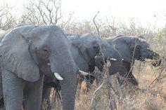 Midden in een kudde olifanten wat een sensatie