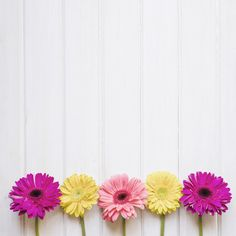 Colorful gerberas on white Free Photo Flower Background Wallpaper, Background Pictures, Flower Backgrounds, Pink Wallpaper, Wallpaper Backgrounds, Iphone Wallpaper, Flower Frame, Flower Art, Floral Flowers