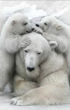 This is my mom...is mine too !! Precious polar bears.