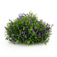 3d flowering shrubs