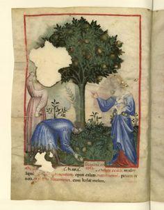 Nouvelle acquisition latine 1673, fol. 5v, Récolte des grenades amères. Tacuinum sanitatis, Milano or Pavie (Italy), 1390-1400.