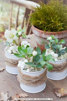 White planters and plants