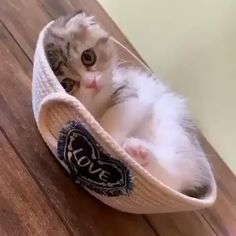 kittens cutest videos So cute TU Sep 2019 `~~ ~ ~ ( . Cute Baby Cats, Cute Cats And Kittens, Cute Little Animals, Cute Funny Animals, Cute Dogs, Cute Babies, Kitty Cats, Funny Cats, Diy Funny