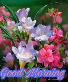 Morning Morning, Good Morning Flowers, Good Morning Friends, Good Morning Greetings, Good Morning Good Night, Good Morning Wishes, Good Morning Quotes, Morning Pictures, Good Morning Images