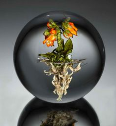 Paul Stankard Art | ... -glass-gardens-encased-in-clear-glass-orbs-by-paul-stankard-2.jpg