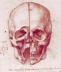 Skull by Leonardo Da Vinci.