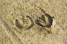 empreintes de cheval sable - Recherche Google Recherche Google, Horse