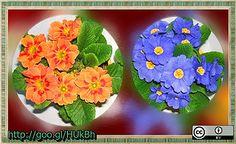 primula-narancs-es-egszinkek-2013-03-06-http---goo.gl-HUkBh by BerczikAndrea, via Flickr