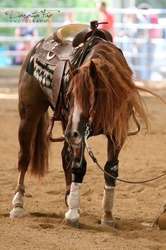 Check out the beautiful mane on this horse; Crome Dont Corrode (Custom Crome x Maggie Chex)