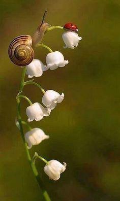 Toutes ces vies dans le jardin - Le cottage de Gwladys - #ces #Cottage #dans #de #Gwladys #jardin #le #toutes #vies