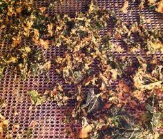kale chips excalibur dehydrator